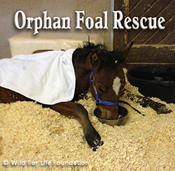 Orphan Foal Rescue